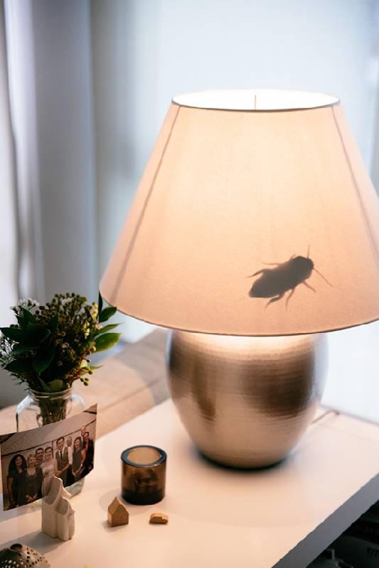 faux insectes