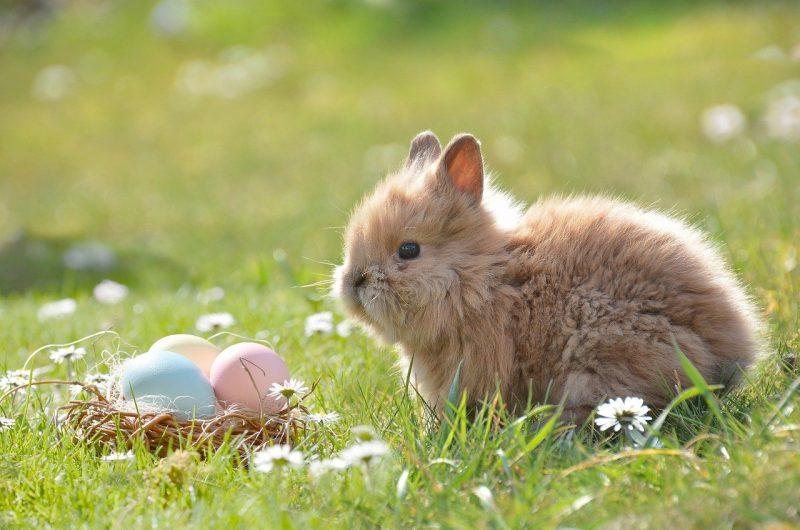 histoire du-lapin-de-paques