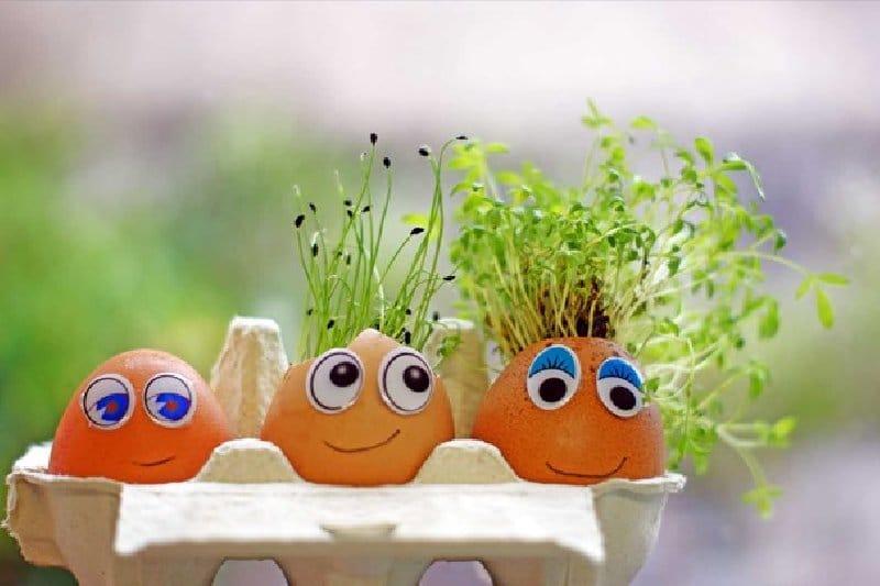 Projet de plantes pour les vacances scolaires